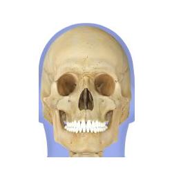 bone25